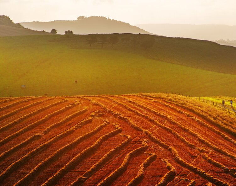 A Day Out or a Staycation in the South Downs National Park?